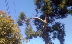 tree removal cost harare