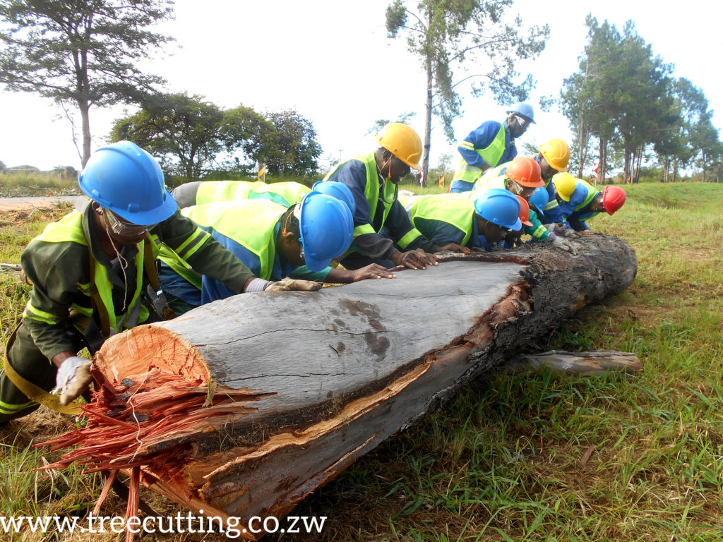 cutting and trimming trees between Nyazura and Rusape Tollgate along Highway