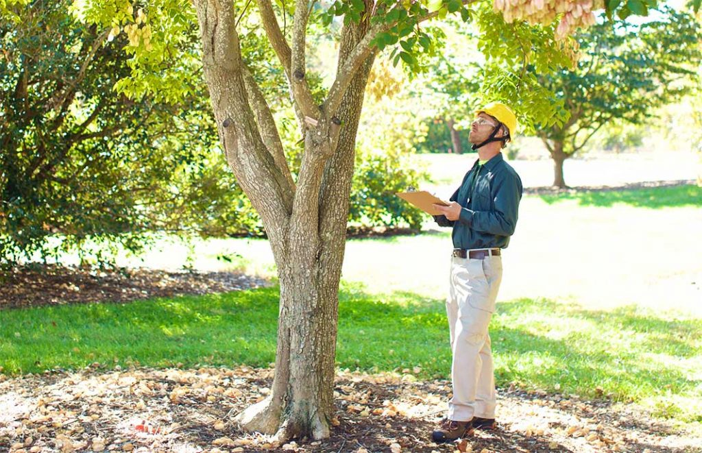 tree cutting services assessment