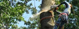 tree cutting services harare