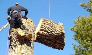 tree cutting cost harare
