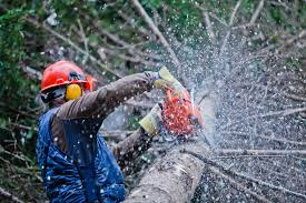 tree cutting costs harare